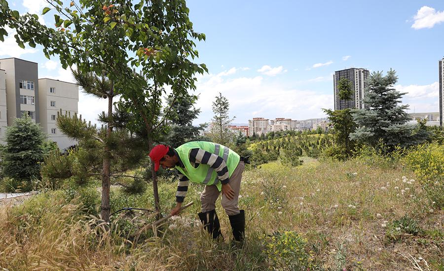 Etimesgut Ağaçlanıyor
