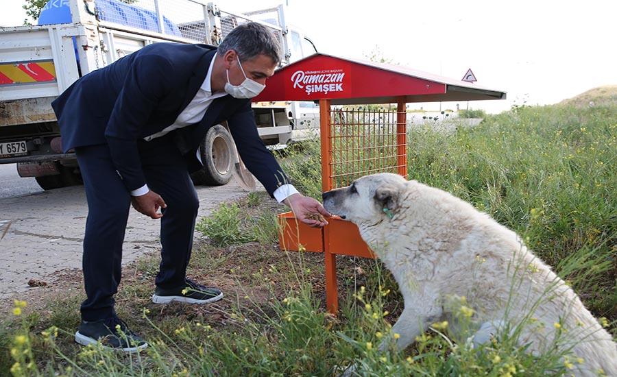 Gölbaşından Sokak Hayvanları İçin Yeni Proje