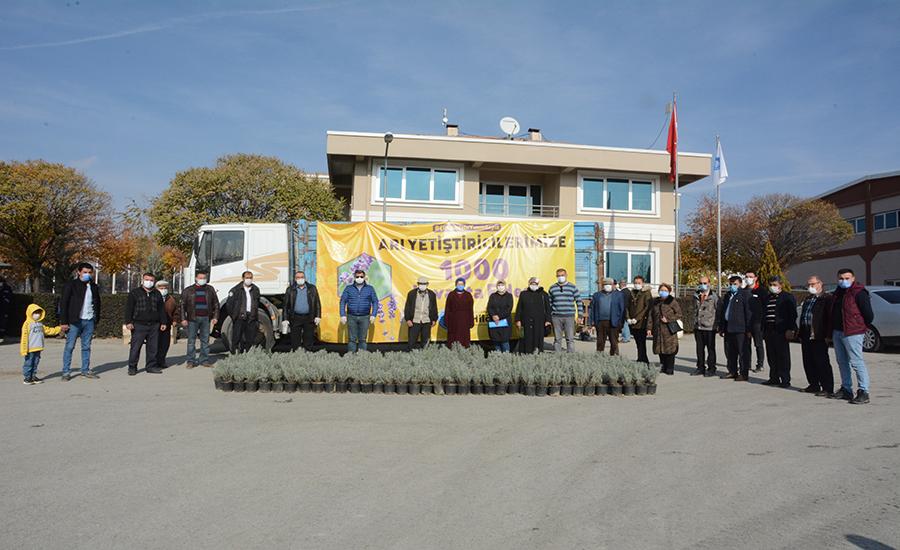 Akyurt Belediyesi Lavanta Dağıttı